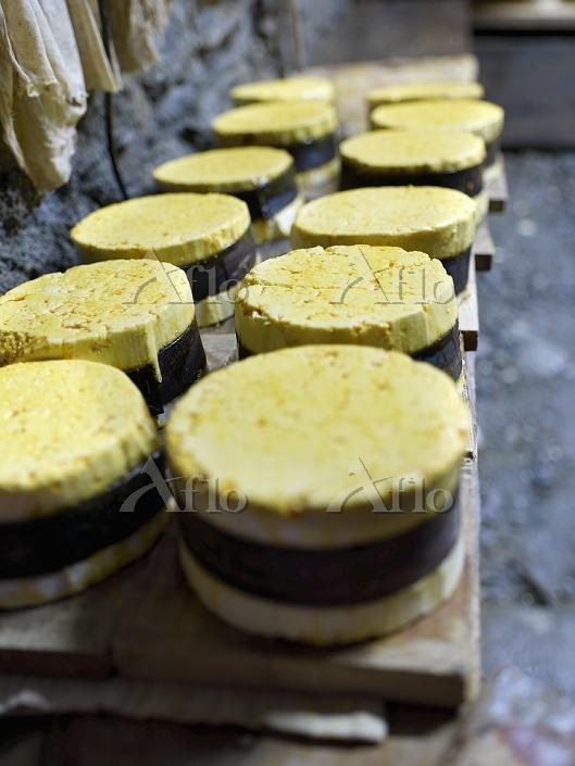 Making Vacherin cheeses