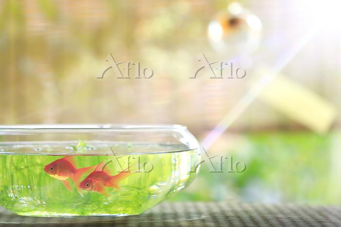 縁側に置かれた金魚鉢と2匹の金魚