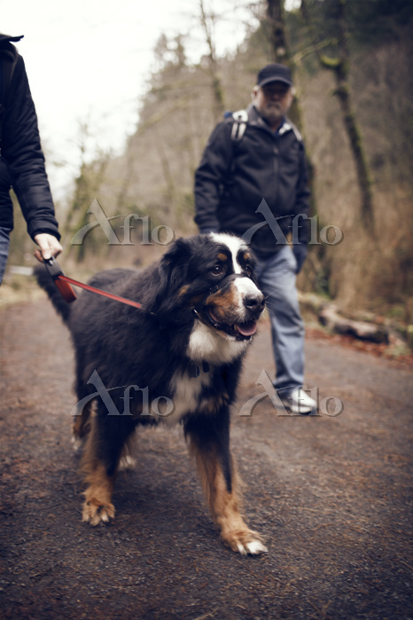Two men with dog on walk in fo・・・