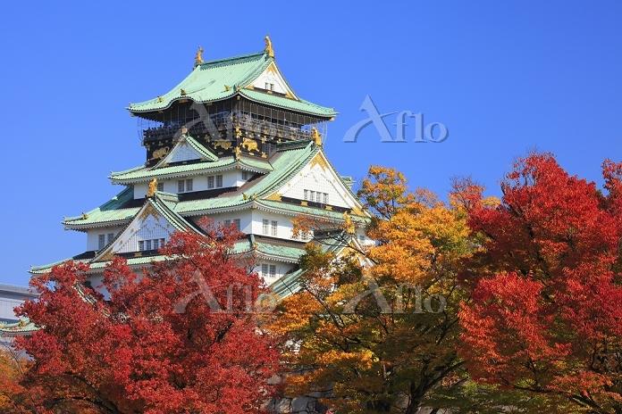大阪府 大阪城 西の丸庭園の紅葉と天守閣