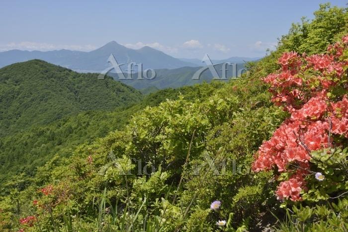 ツツジの低山と磐梯山遠望1