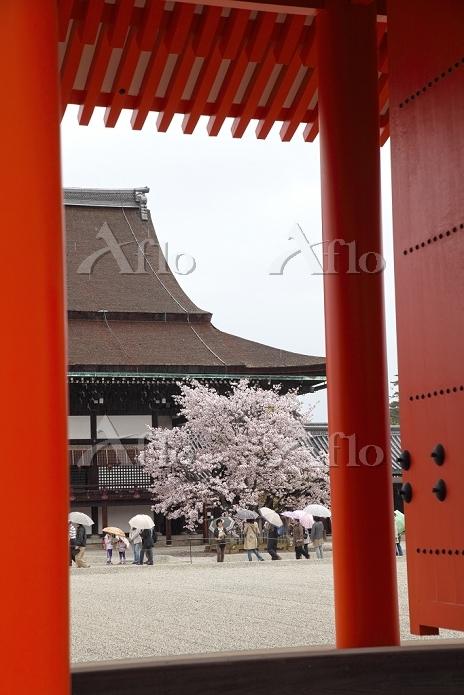 京都府 京都市 京都御所 朱塗りの門より紫宸殿を望む