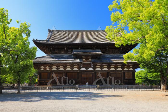 京都府 東寺の金堂と新緑