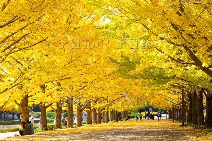 東京都 昭和記念公園