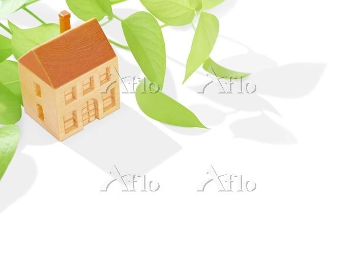 木の家とポトス