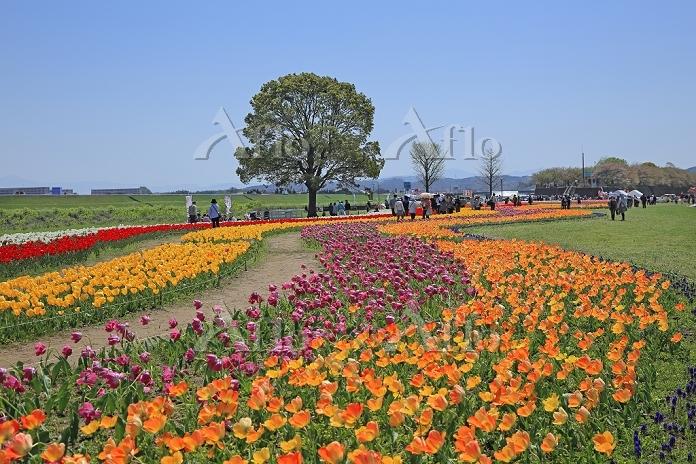 福岡県 2014のおがたチューリッフプフェア