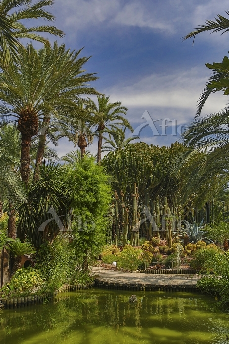 スペイン バレンシア エルチェの椰子園