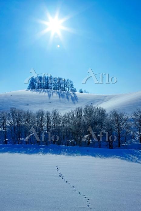 美瑛 カラマツの丘と太陽 美瑛 北海道