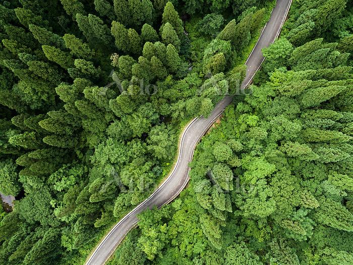 秋田県の県道40号線の山道