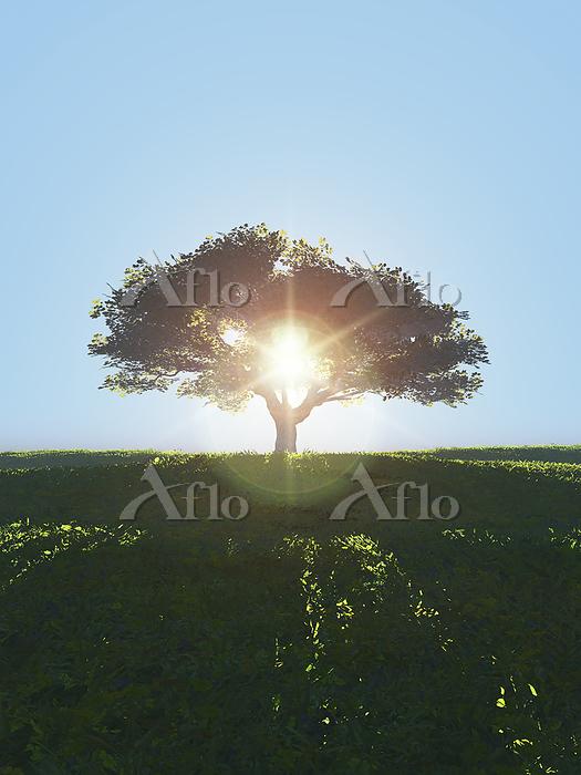 丘に立つ一本の大樹に逆光が射し込む