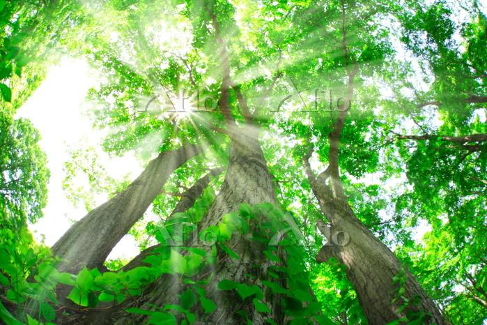青森県 新緑の森