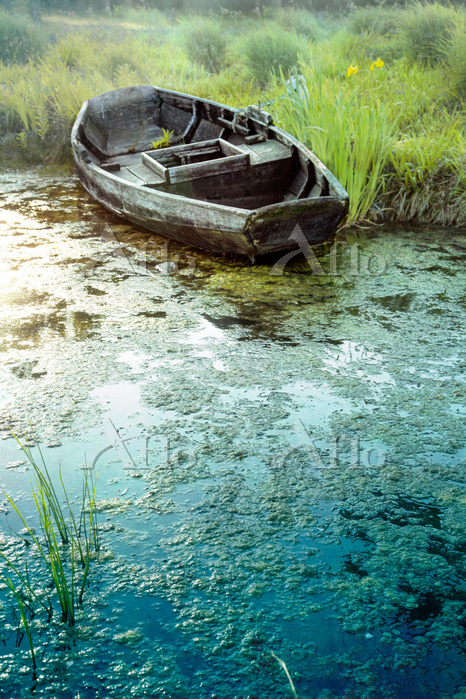 Row Boat Abandoned In Lake Wit・・・