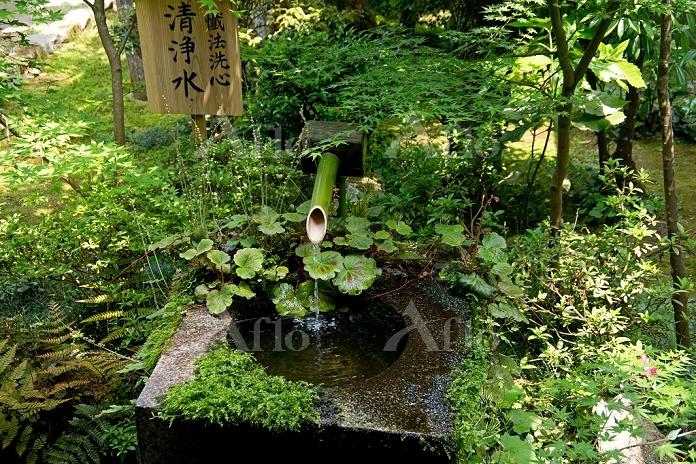 京都府 新緑の三千院