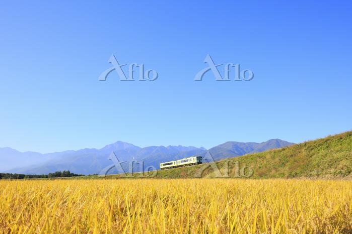 山梨県 JR小海線と稲田と南アルプス