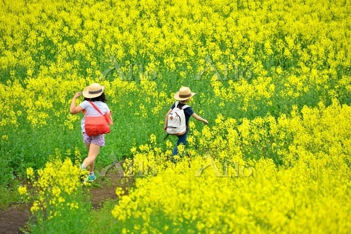 春の花畑を歩く日本人の子供