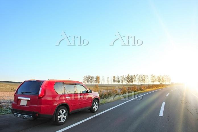 北海道 美瑛の丘 早朝のシラカバ並木と自動車