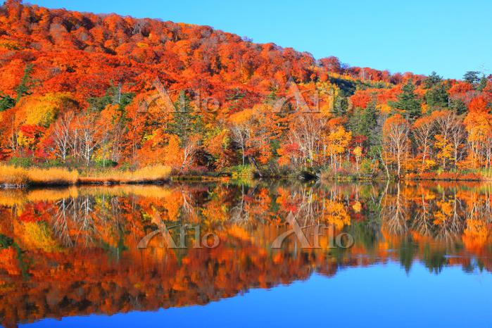 秋田県 八幡平・大沼 水鏡に映る湖畔の紅葉