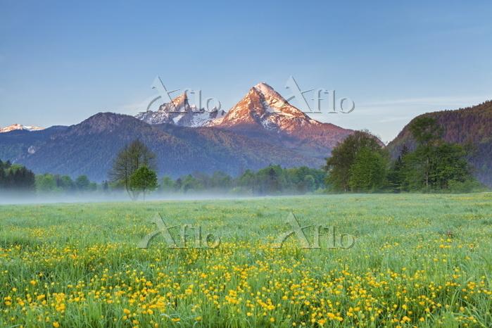 ドイツ バイエルン州 花咲く春の草原とヴァッツマン山