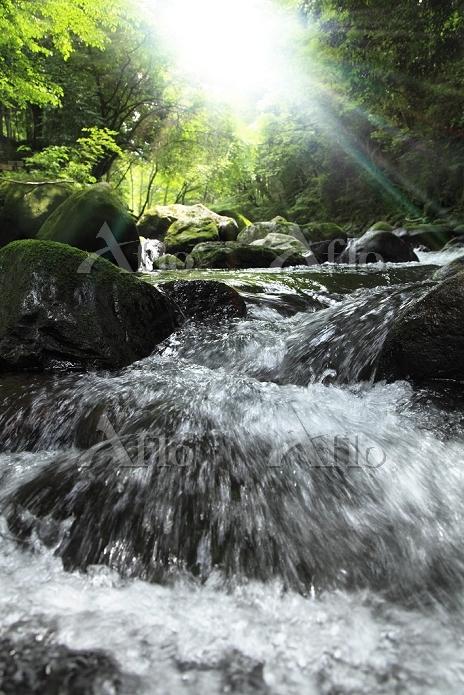 朝日輝く新緑の渓流