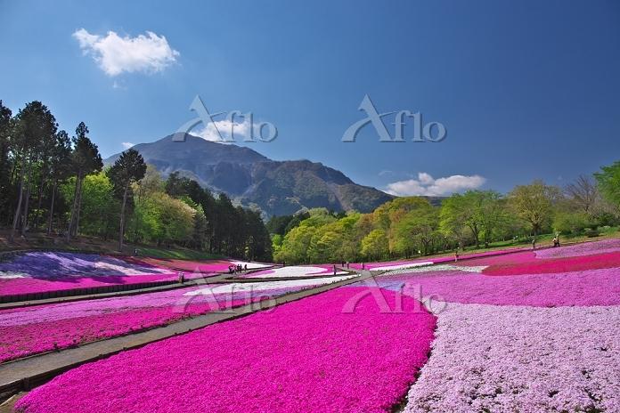 埼玉県 羊山公園 芝桜の丘と武甲山