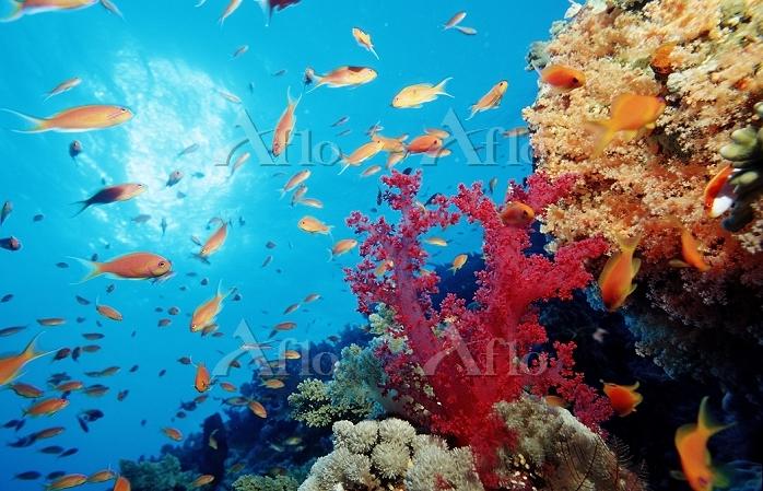 エジプト 紅海 海中