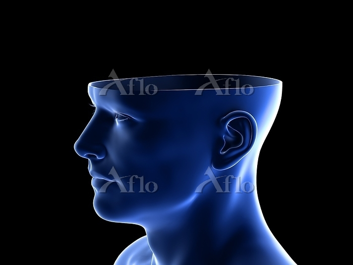 Head anatomy, illustration.
