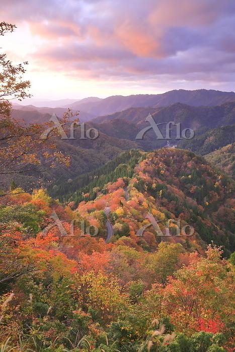 滋賀県 高島市 秋のおにゅう峠