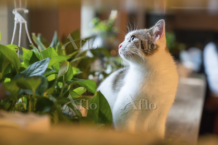 Cat on the window;China