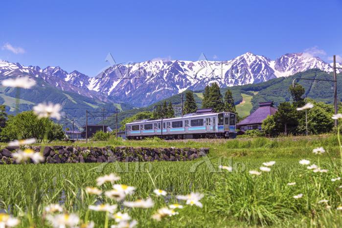 長野県 白馬連峰を走る大糸線普通列車