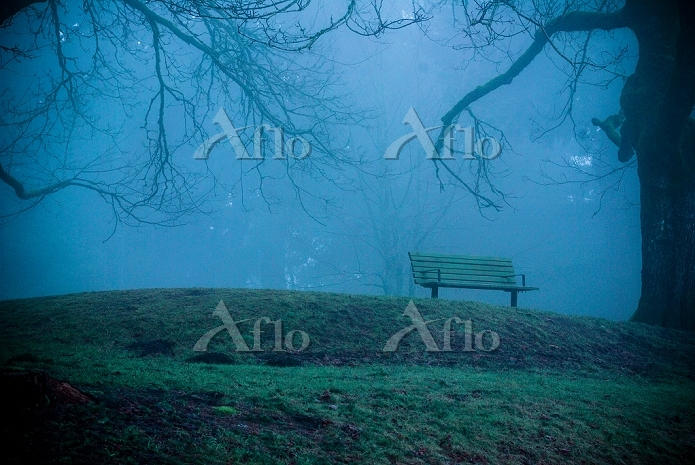 Park Bench on Hill in Fog