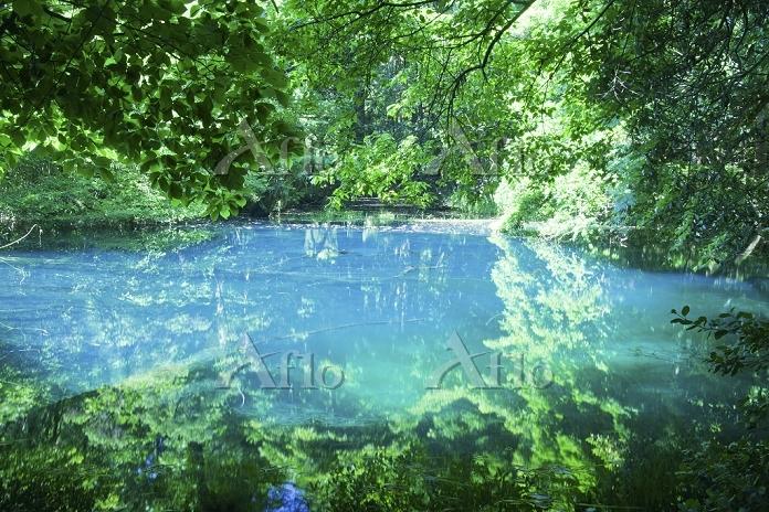山形県 神秘の沼 丸池様