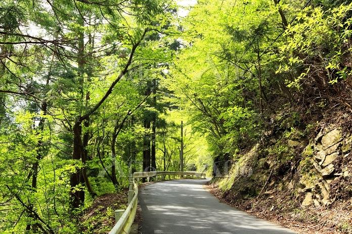 神奈川県 新緑の丹沢県道70号線