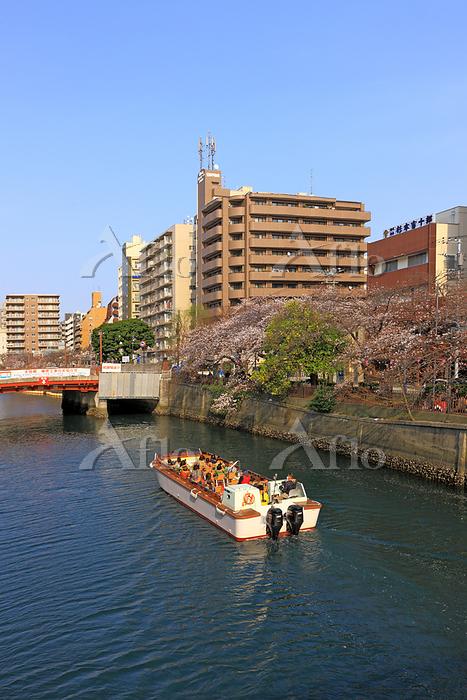 大岡川お花見クルーズ