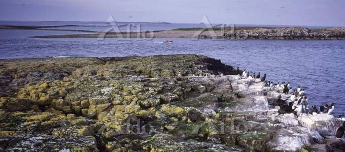 A view of Iner Farne looking t・・・