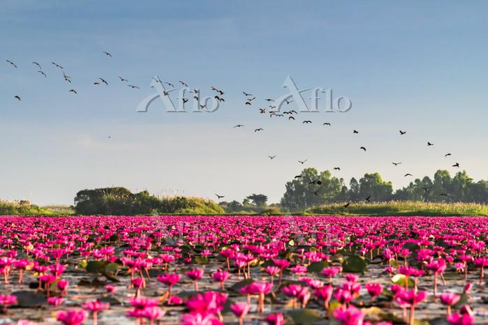 タイ タレーブアデーン