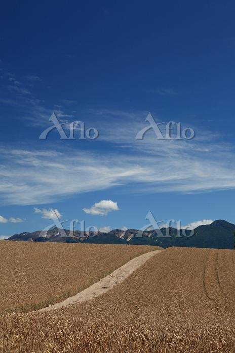北海道 麦畑と十勝岳連峰