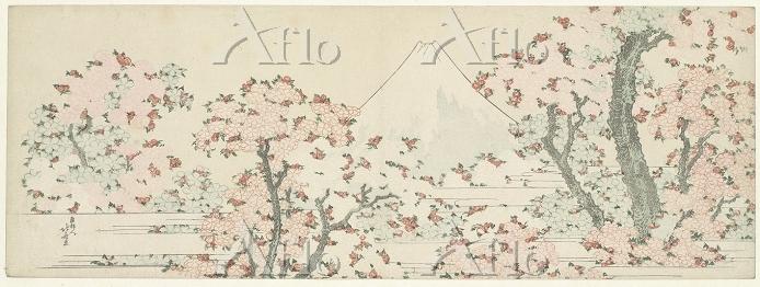 葛飾北斎 「桜花に富士図」