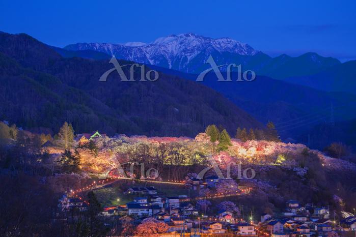 長野県 タカトオコヒガンザクラ咲く高遠城址公園と南アルプス夕・・・