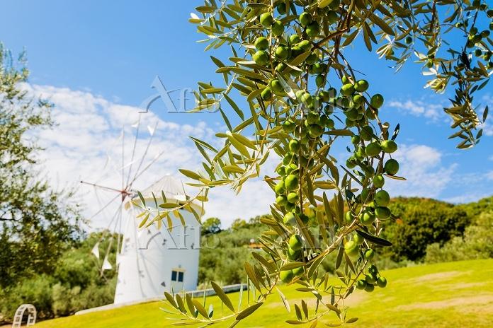 香川県 小豆島オリーブ園 ギリシャ寄贈の風車