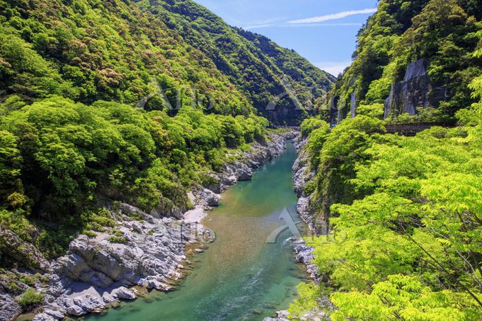 徳島県 新緑の大歩危峡 吉野川