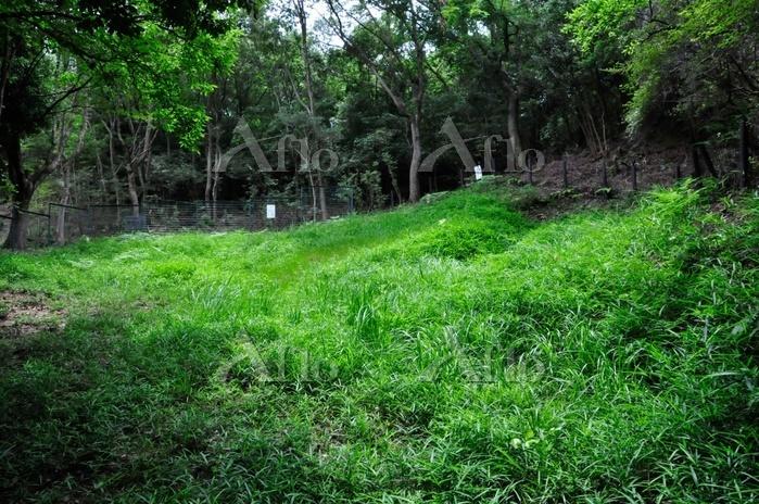 甲山湿原(第4湿原)