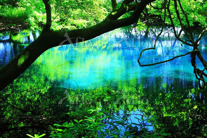 山形県 遊佐町 初夏の丸池様 鳥海山大物忌神社の境外末社境内・・・