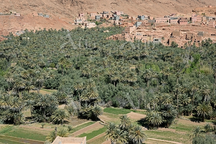 モロッコ トドラ川沿いのオアシス(ティネリールのオアシス)