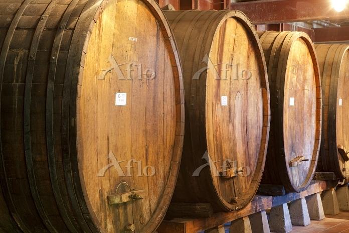 Wine barrels at Beringer Viney・・・