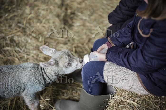 A girl bottle feeding a small ・・・