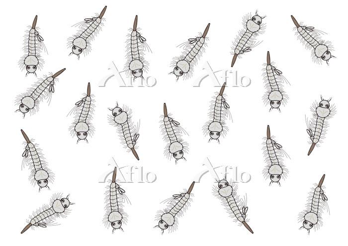 ボウフラの大量発生 蚊の幼虫