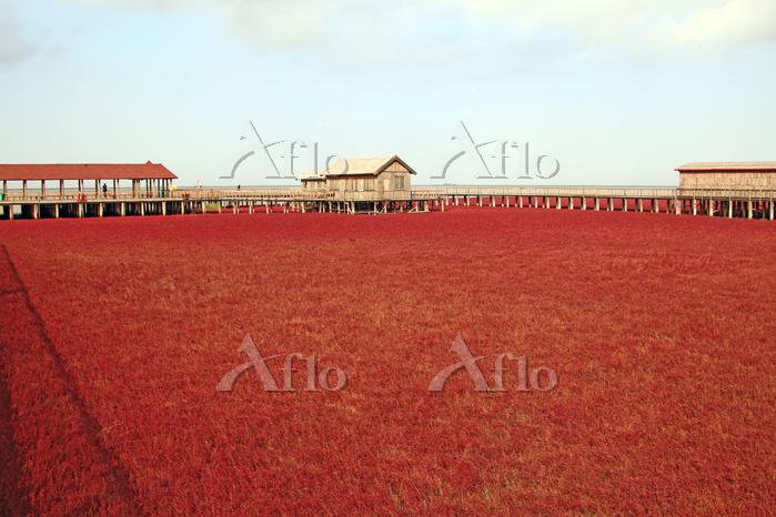 中国 遼寧省 レッドビーチ