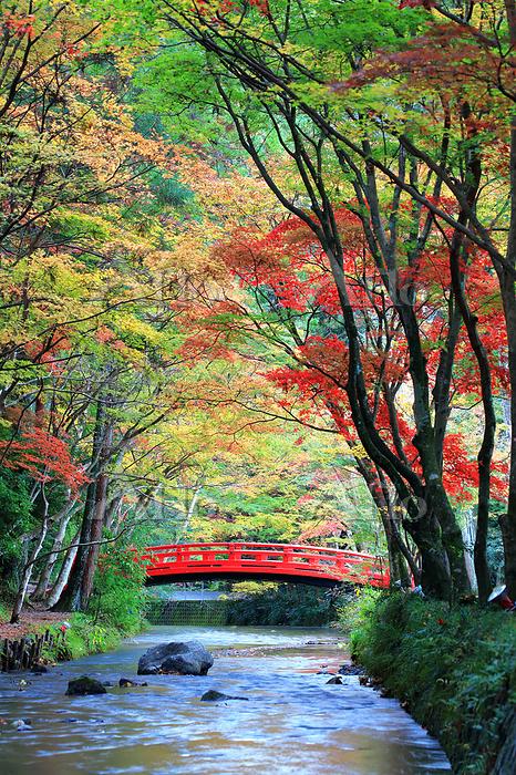 静岡県 紅葉の小国神社