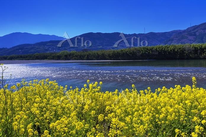 徳島県 菜の花と吉野川
