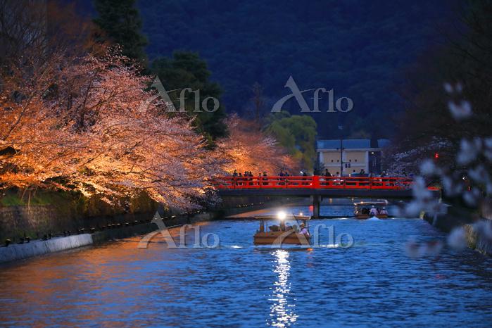 京都府 岡崎疎の桜並木とライトアップ鑑賞の十石舟めぐり